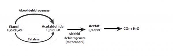 alcoolul aldehiddehidrogenaza
